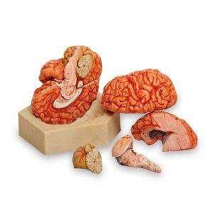 مولاژ مغز هشت قسمتی