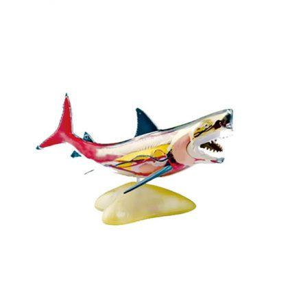 مولاژ کوسه ماهی