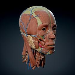 مدلهای آناتومی (مولاژ)