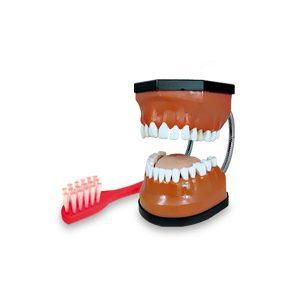مولاژ دندان آموزش مسواک زدن قابل تفکیک