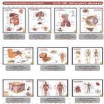 سری پوستر های  بدن انسان (ده عددی)Human body posters set