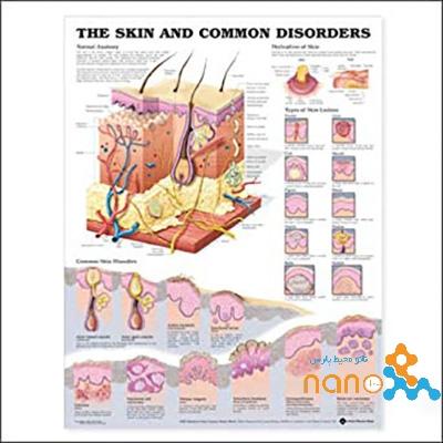 پوستر آناتومی پوست