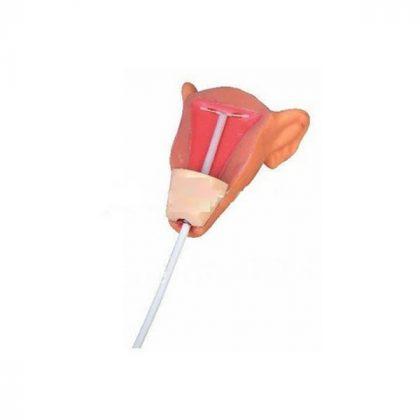 مولاژ آموزش آ یو دی گذاری B (مانکن IUD)