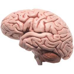 مولاژ مغز و اعصاب