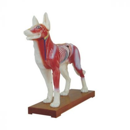 مولاژ سگ