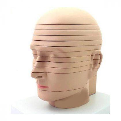 مولاژ سر انسان برش عرضی 12 لایه
