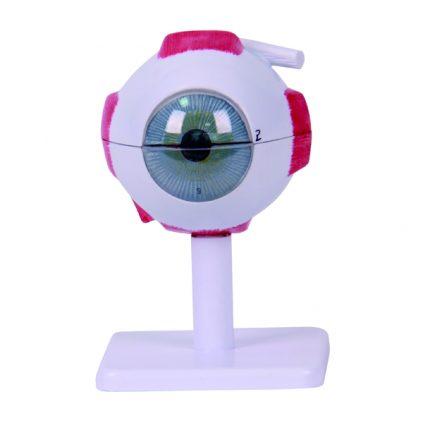 مولاژ کره چشم سه برابر اندازه طبیعی