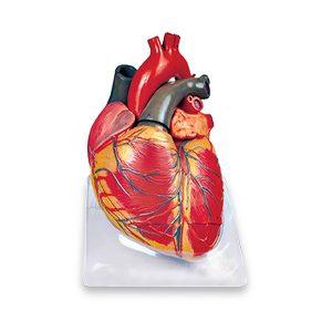 مولاژ قلب 3برابر-6قسمتی