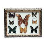 تابلو پروانه ۸ گونه