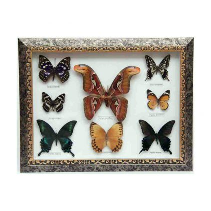 تابلو پروانه 8 گونه
