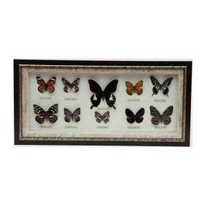 تابلو پروانه 10 گونه