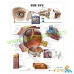 پوستر آناتومی چشم The eye poster